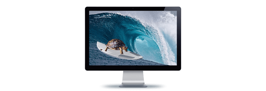 image of a turtle on a surfboard